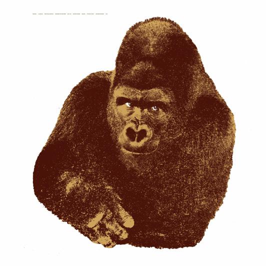 s1429_gorilla01