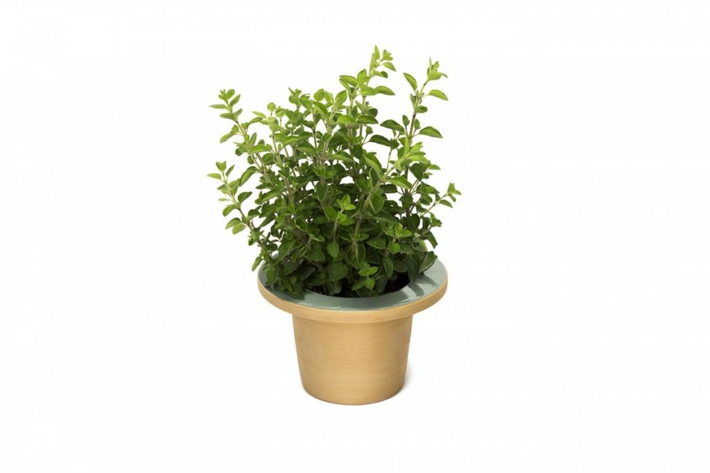 pofi-pianta
